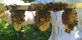 Beekeeping Club buzzes to spread knowledge, raise awareness