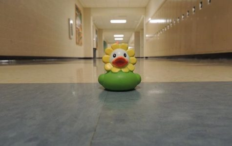 Ducks of Algonquin ruffle feathers of mystery throughout halls