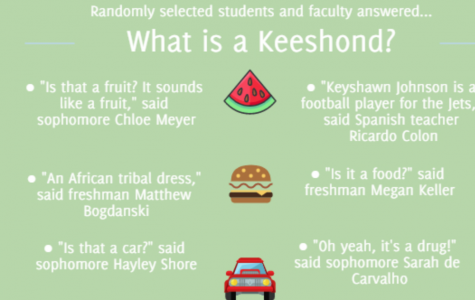 What is a keeshond? (infographic)
