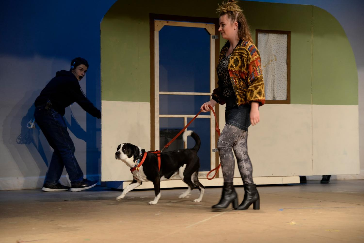 Junior Lauren Early walks American mutt Bruno across the stage, as he makes his debut in the performance.