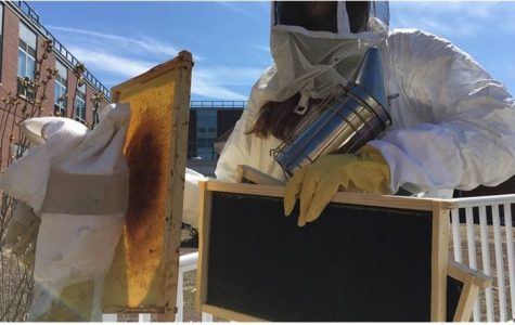 Beekeeping Club tends courtyard hive for honey, to end 'bee stigma'