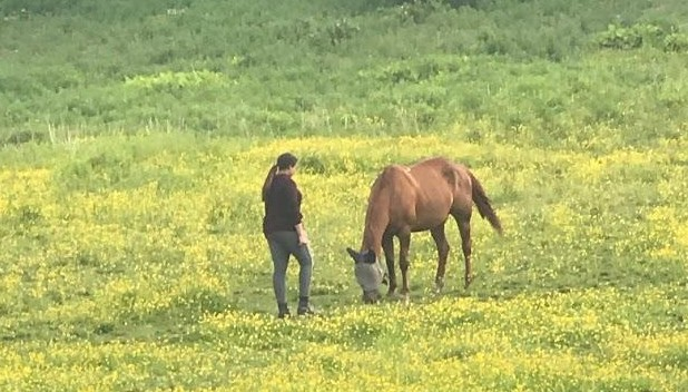 Junior Lexi Eastham stands beside her horse, Teak, in a meadow.