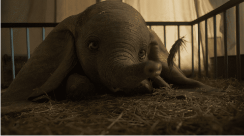 Staff writer Elyssa Rubin writes that the CGI animals, like the one of Dumbo, is one of the best features of the remake.