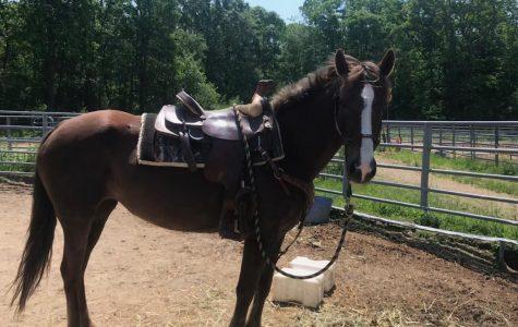 Jordan prepares for final horse hurrah at competition in June