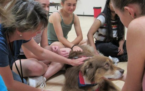 SLIDESHOW: Therapy animals relieve stress during ruff finals week