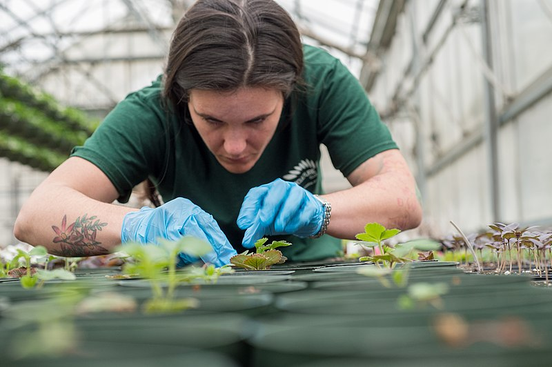 A technical college student participates in horticulture, or gardening, as a part of her culinary program. Now, Algonquin students have their own culinary pathway that includes a horticulture class.