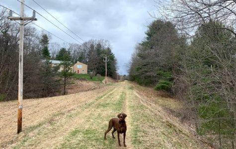 My dog Casco waits for me to throw him a tennis ball as we walk along the Wachusett Aqueduct trail.