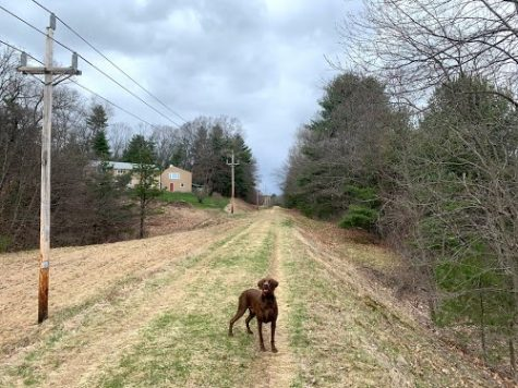 My dog Casco waits for me to throw him a tennis ball as we walk along the Wachusett Aqueduct trail.